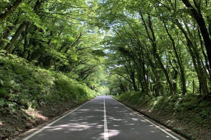 島根県 SANBESAPCE 緑のトンネル